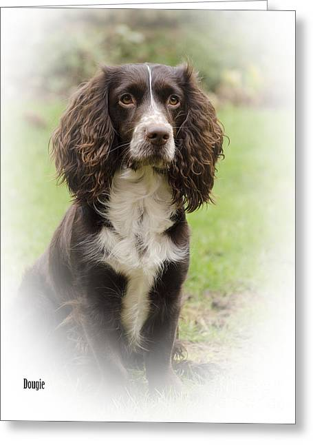 Spaniel Greeting Cards - Dougie In Vignette Greeting Card by Linsey Williams