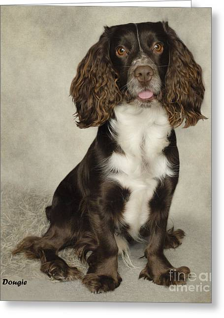 Spaniel Greeting Cards - Dougie The Cocker Spaniel  Greeting Card by Linsey Williams