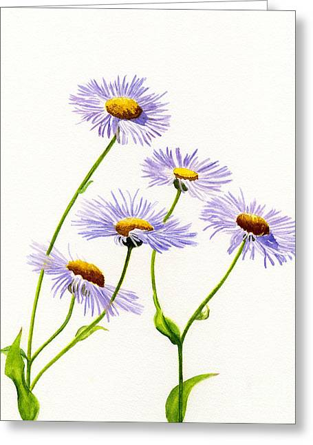 Aster Greeting Cards - Douglas Aster Wild Flower Greeting Card by Sharon Freeman