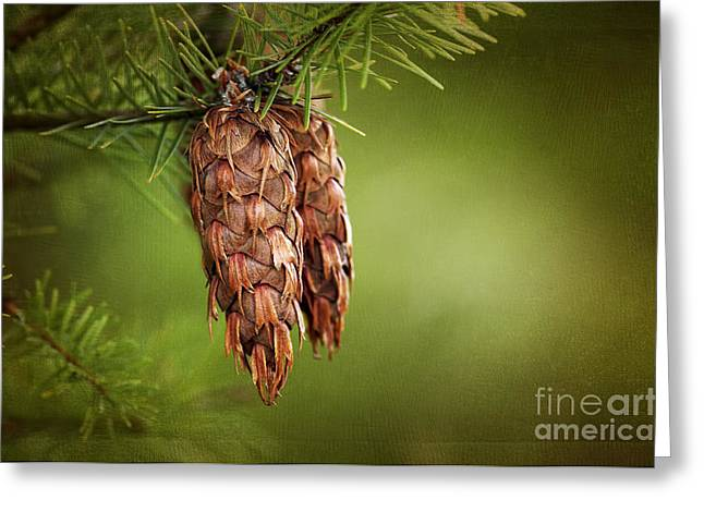 Pine Cones Digital Greeting Cards - Douglas Fir Cones Greeting Card by Sharon  Talson