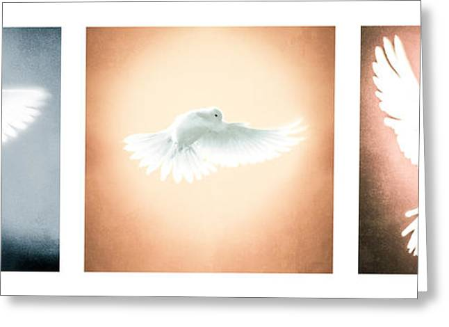 White Wing Greeting Cards - Dove In Flight Triptych Greeting Card by Yo \Pedro