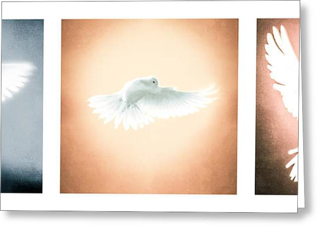 Dove In Flight Triptych Greeting Card by YoPedro