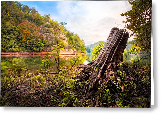Tree Roots Art Greeting Cards - Down by the River Greeting Card by Debra and Dave Vanderlaan