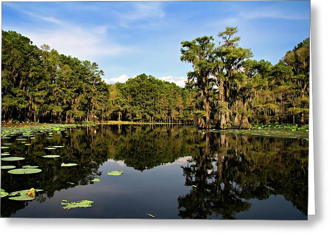 Alga Greeting Cards - Down In The Bayou Greeting Card by Lana Trussell
