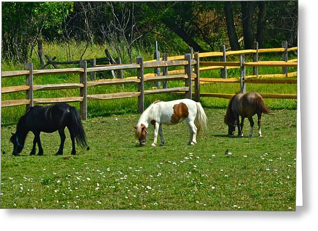 Gaiting Greeting Cards - Down on the Ranch Greeting Card by Frozen in Time Fine Art Photography