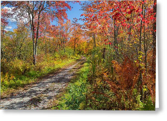 Old Country Roads Greeting Cards - Down the Autumn Road Greeting Card by Bill  Wakeley