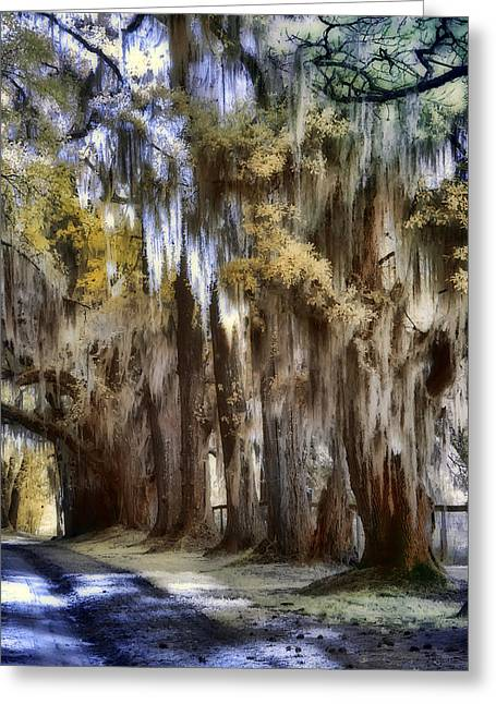 South Carolina Infrared Landscape Greeting Cards - Down The Backroad Greeting Card by Sharon M Connolly