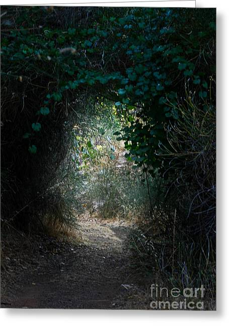 Grapevines Photographs Greeting Cards - Down The Rabbit Hole Greeting Card by Mitch Shindelbower