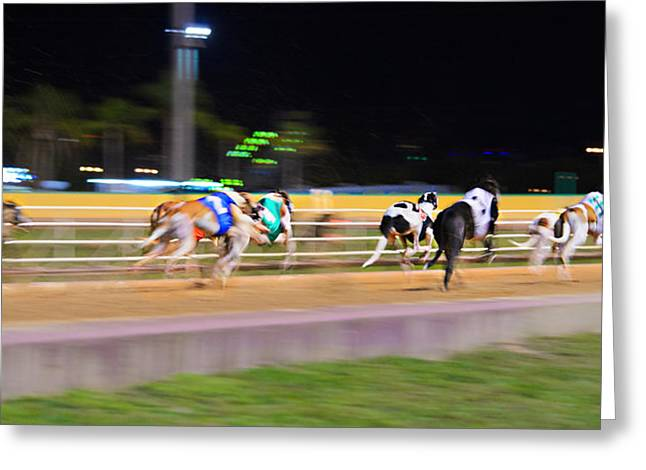 Dog Race Track Greeting Cards - Down The Track Greeting Card by Keith Armstrong