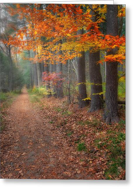 Woodland Scenes Greeting Cards - Down The Trail Greeting Card by Bill  Wakeley