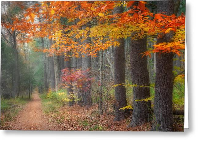 Woodland Scenes Greeting Cards - Down The Trail Square Greeting Card by Bill  Wakeley