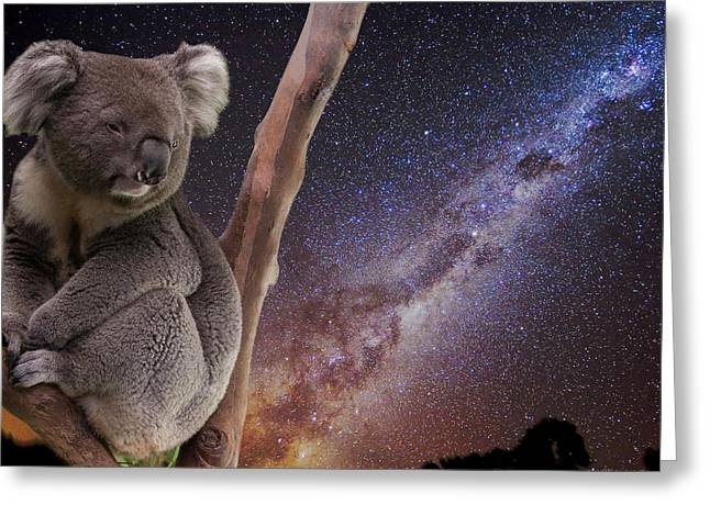 Coonabarabran Greeting Cards - Down Under Greeting Card by Charles Warren
