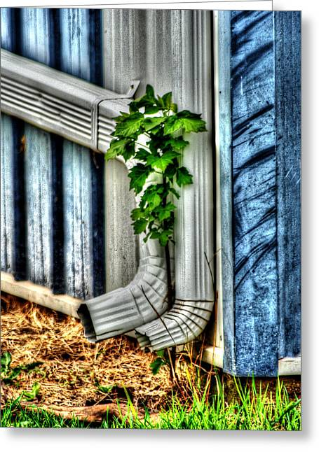 Downspout Greeting Card by Doc Braham