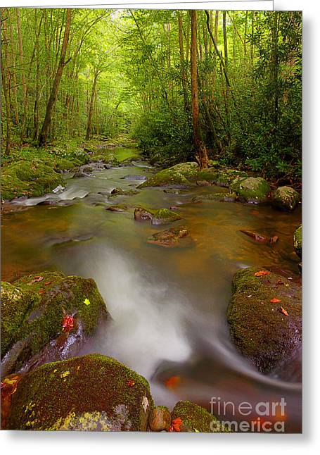 Flowing Stream Greeting Cards - Downstream Greeting Card by Michael Eingle