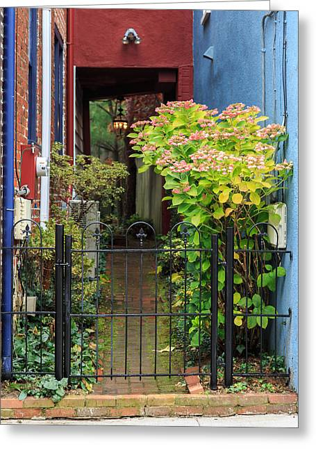 Annapolis Maryland Greeting Cards - Downtown Garden Path Greeting Card by Jennifer Casey