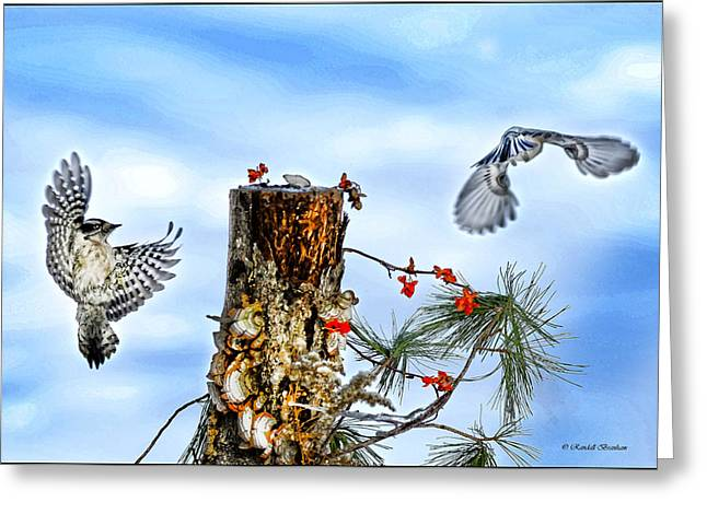 Photos Of Lichen Greeting Cards - Downy and Titmouse playing on Lichen Stump Greeting Card by Randall Branham