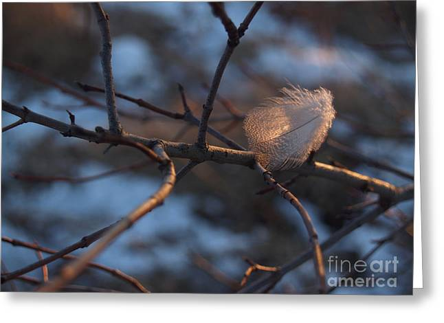 The Thing Greeting Cards - Downy Feather Backlit on Wintry Branch at Twilight Greeting Card by Anna Lisa Yoder