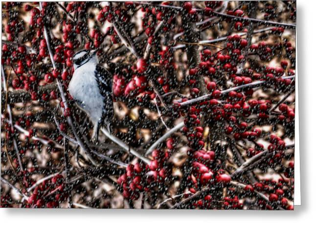 Downy Greeting Cards - Downy in the Berries Greeting Card by Shelley Neff
