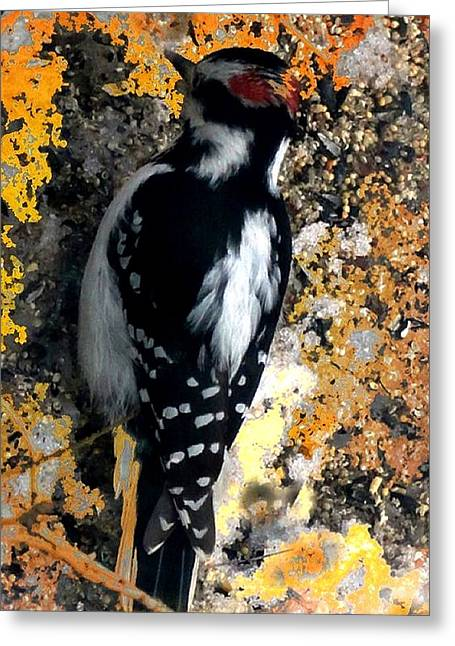 Log Cabins Greeting Cards - Downy Woodpecker Greeting Card by Mike Breau
