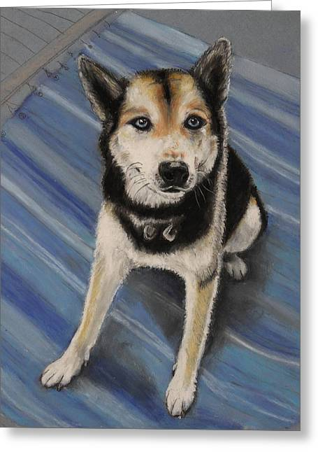 Husky Pastels Greeting Cards - Draco Greeting Card by Jeanne Fischer
