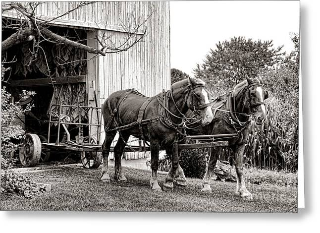 Draft Horse Greeting Cards - Draft Horses at Work Greeting Card by Olivier Le Queinec