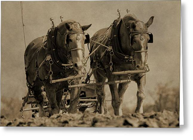 Sowing Greeting Cards - Draft Horses Greeting Card by Dan Sproul