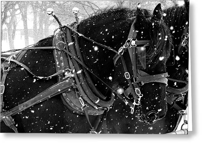 Horse And Cart Greeting Cards - Draft Horses in the Snow Greeting Card by Megan Luschen