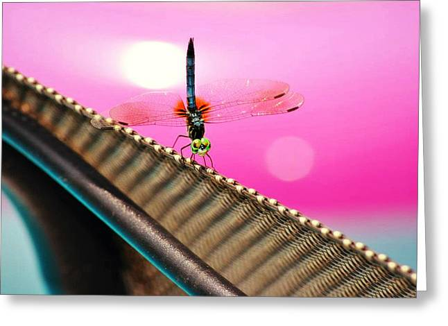 Dragon Fly  Greeting Card by Chastity Hoff