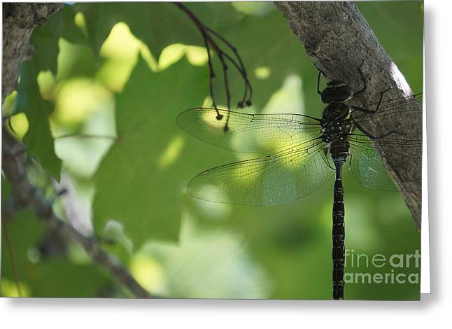 Faa Featured Greeting Cards - Dragonfly Greeting Card by Zori Minkova