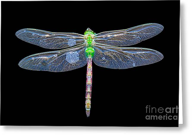 Damsel Fly Greeting Cards - Dragon in water Greeting Card by Todd Bielby