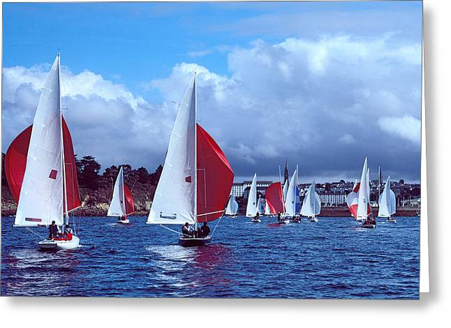 Dragon Regatta In Baie De Douarnenez Greeting Card by Panoramic Images