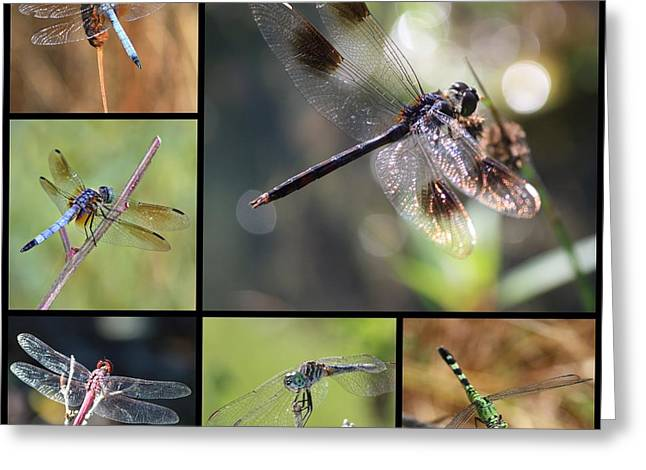 Flying Insects Greeting Cards - Dragonflies on Twigs Collage Greeting Card by Carol Groenen