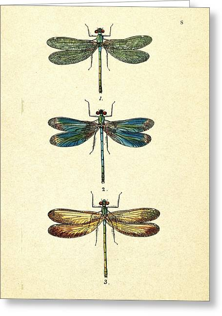 Dragonflies Greeting Card by Pati Photography