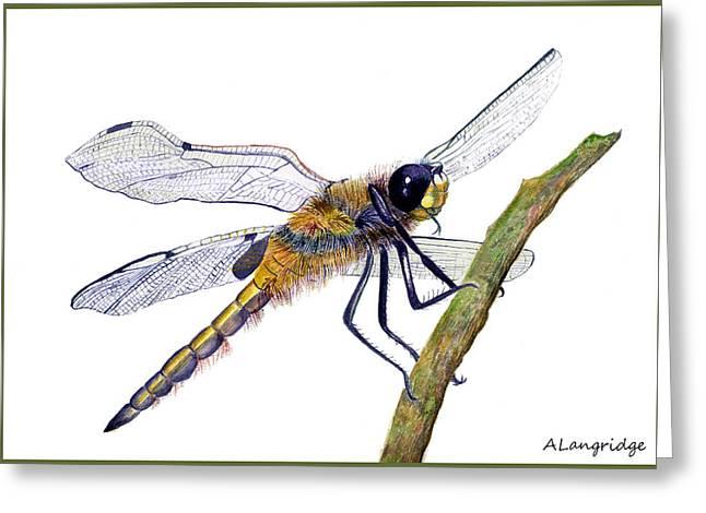 Demoiselles Paintings Greeting Cards - Hairy Dragonfly of England Greeting Card by Alison Langridge