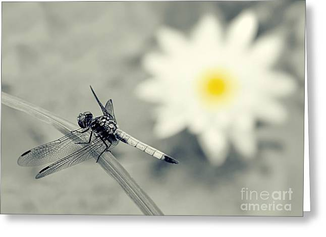 Water Lilies And Insects Greeting Cards - Dragonfly and Water Lily Greeting Card by Sharon Woerner