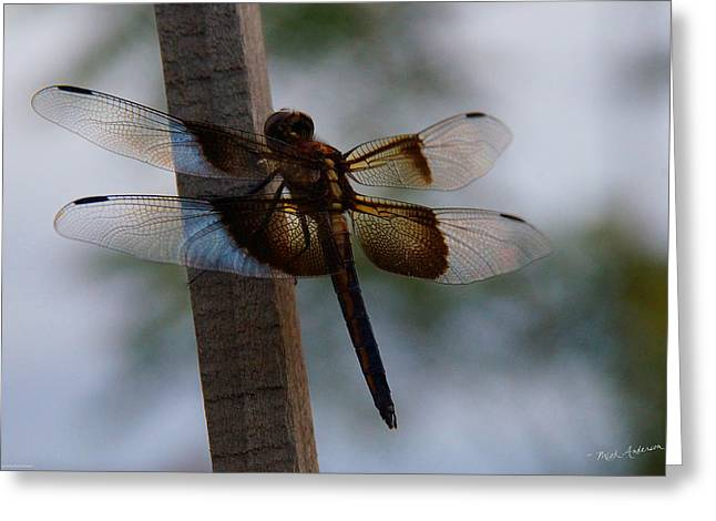 Valuable Greeting Cards - Dragonfly at Rest Greeting Card by Mick Anderson