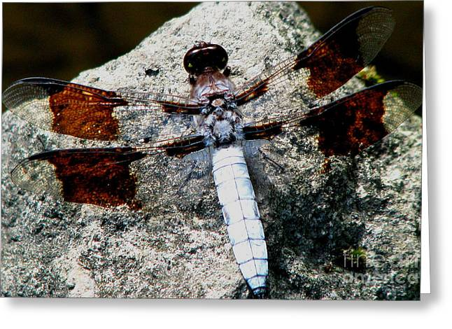 Shelley Myke Greeting Cards - Dragonfly Basking on a Warm Summer Day Greeting Card by Inspired Nature Photography By Shelley Myke