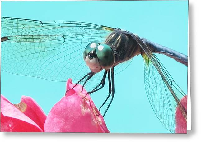 Close-up Pyrography Greeting Cards - Dragonfly Beauty Greeting Card by Valia Bradshaw