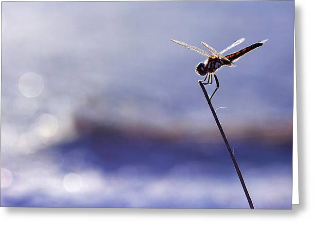 Dragonfly Blue Greeting Card by Laura Fasulo