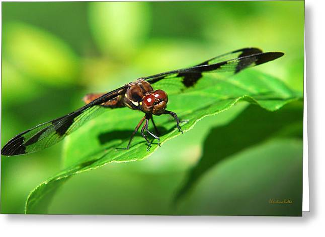 Green Darner Dragonflies Greeting Cards - Dragonfly Closeup Greeting Card by Christina Rollo