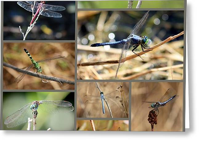 Dragonfly Collage Greeting Card by Carol Groenen