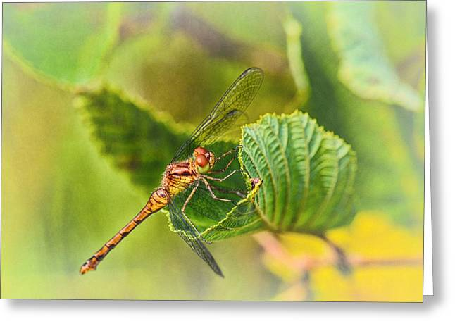 Dragonfly Days II Greeting Card by Susan Capuano