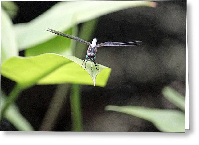 Photographs Digital Art Greeting Cards - Dragonfly Dimensions Greeting Card by Suzanne Gaff