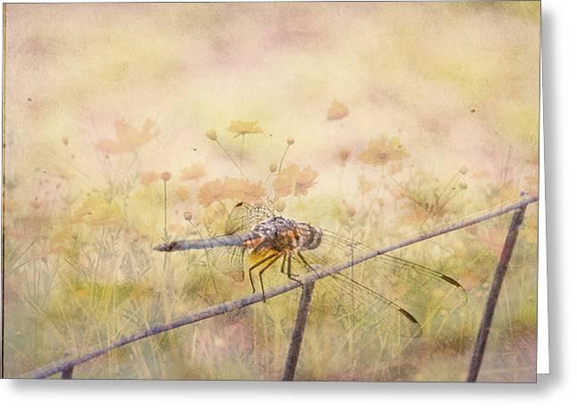 Judy Hall-folde Greeting Cards - Dragonfly Dreams Greeting Card by Judy Hall-Folde
