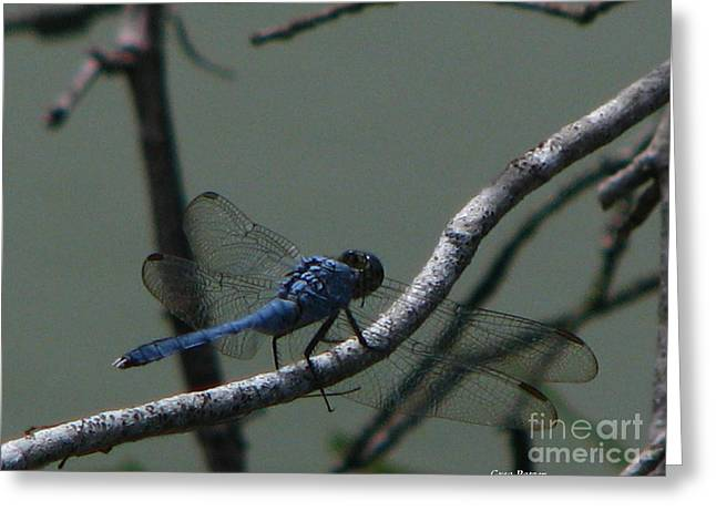 Dragonfly Greeting Card by Greg Patzer
