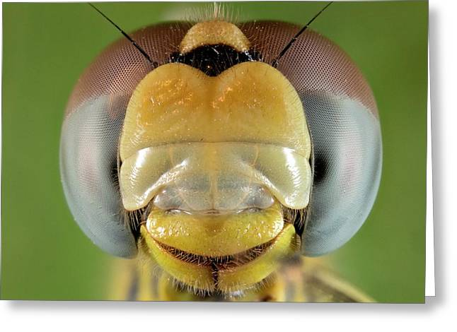 Dragonfly Head Greeting Card by Nicolas Reusens