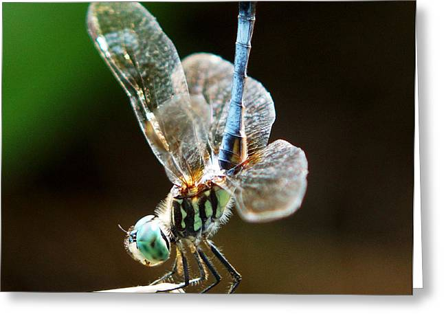 Kim Pate Greeting Cards - Dragonfly Headstand Greeting Card by Kim Pate