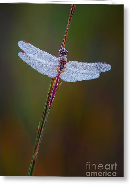 Dew Covered Greeting Cards - Dragonfly II Greeting Card by Todd Bielby