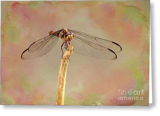 Dragonflies Greeting Cards - Dragonfly in Fantasy Land Greeting Card by Sabrina L Ryan