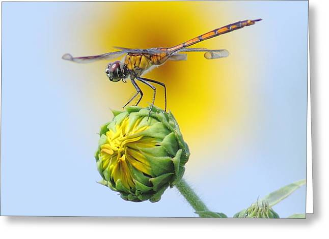 Dragonfly In Sunflowers Greeting Card by Robert Frederick
